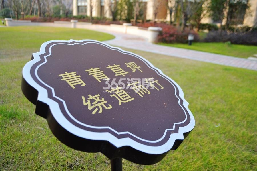 新华联梦想城小区绿化(2016年12月摄)