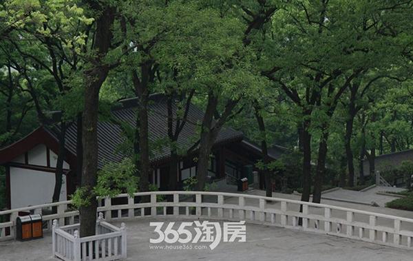 美好紫蓬山壹号周边环境紫蓬山实景图(2017.8)